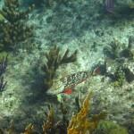 rybka2
