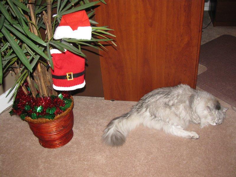 Костюмчик Санта Клауса ждет когда кот его наденет:)