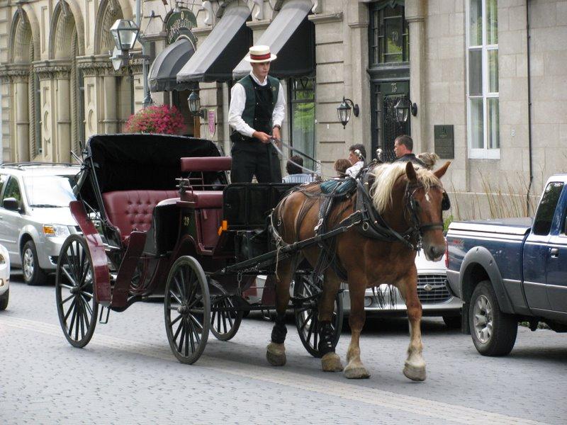 Лошадки в Квебеке