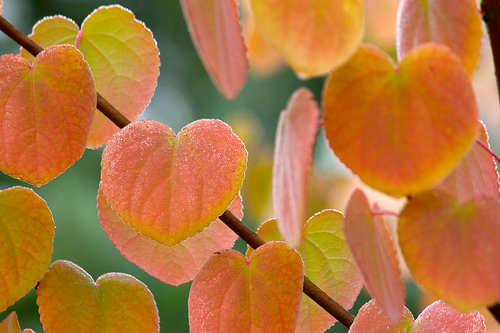 leaveswithgreen