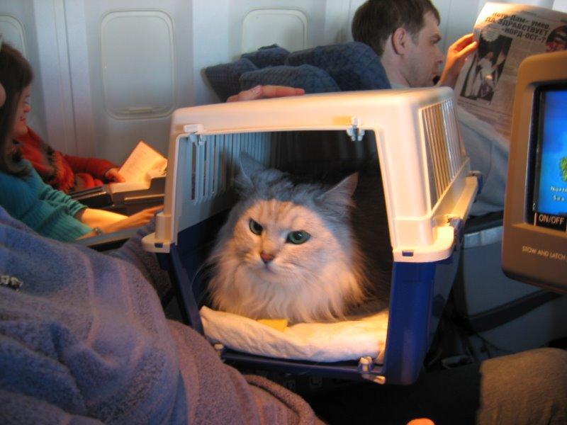 В самолете в Канаду