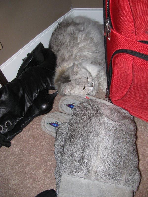 Серый кот как валенки из зайчика