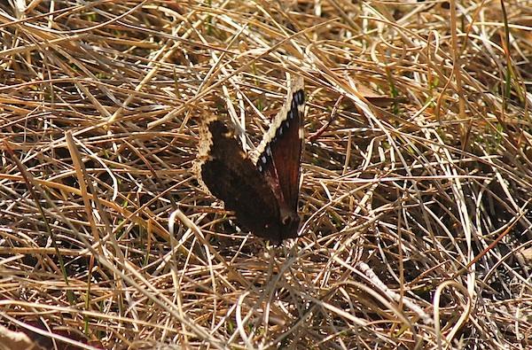 Не только муравьи - но и бабочки уже летают! Видел их, штук пять.