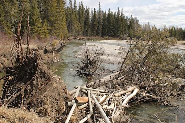 Постепенно я добрался до главного русла реки Элбой. Как я уже заметил ренее, в долине реки много всяких проток, они совсем небольшие, как ручьи. Река уже избавилась ото льда. Мы стоим на берегу который всё время подмывается быстрыми водами.
