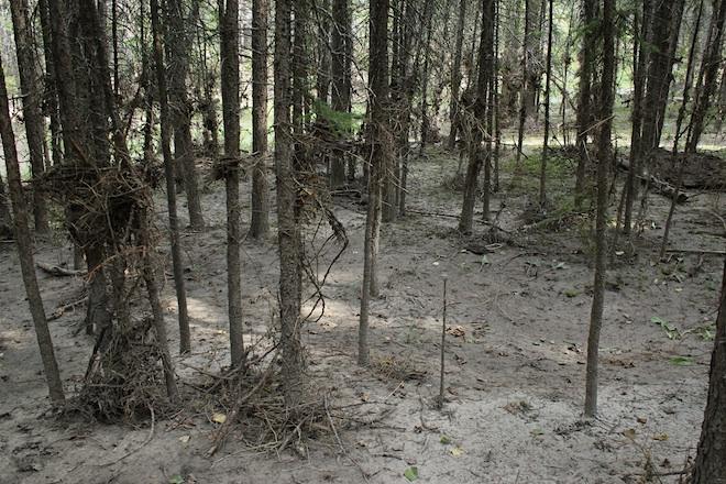 До наводнения это место было покрыто симпатичной лужайкой из мха.