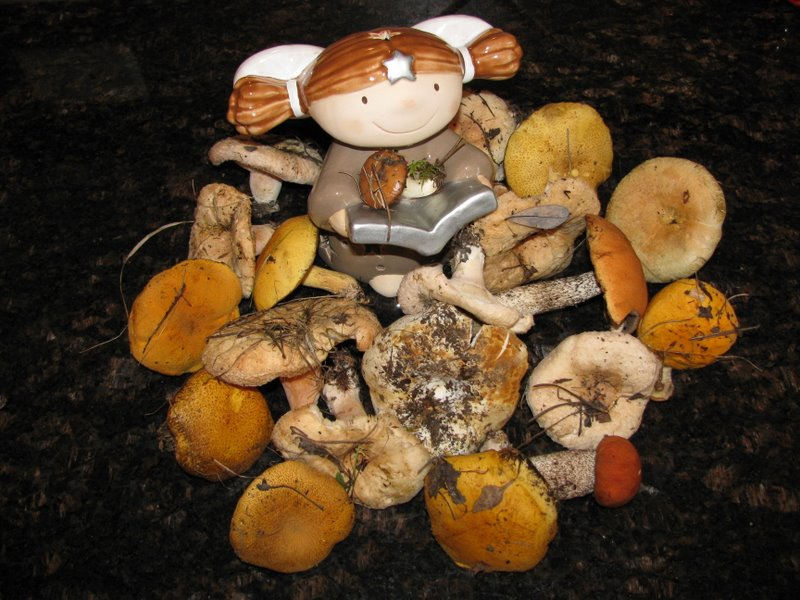 Осенние грибочки:)