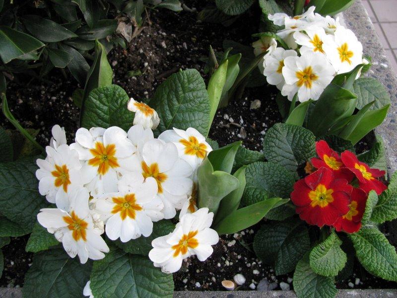 Весенние цветы!