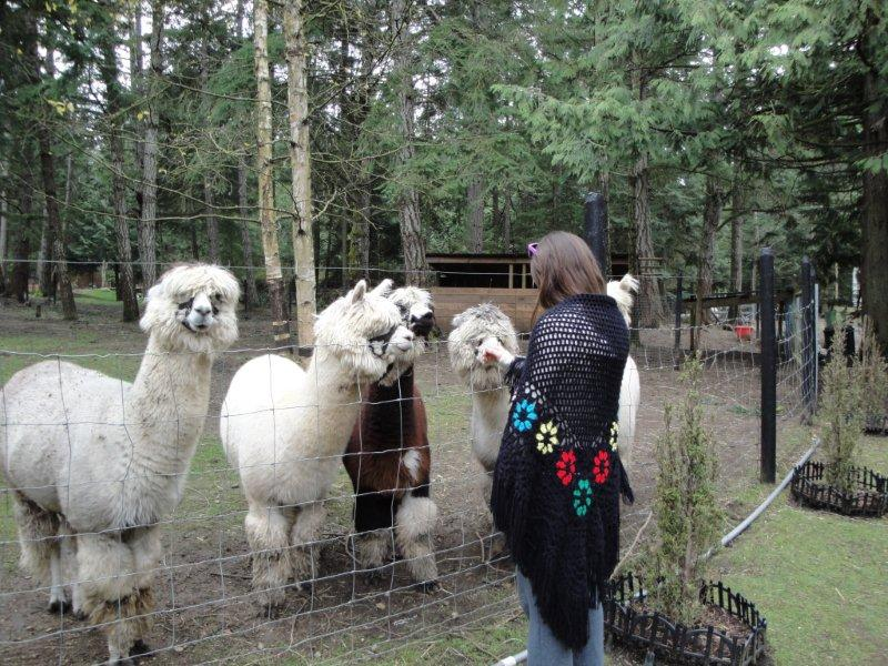 Alpaca Ranch