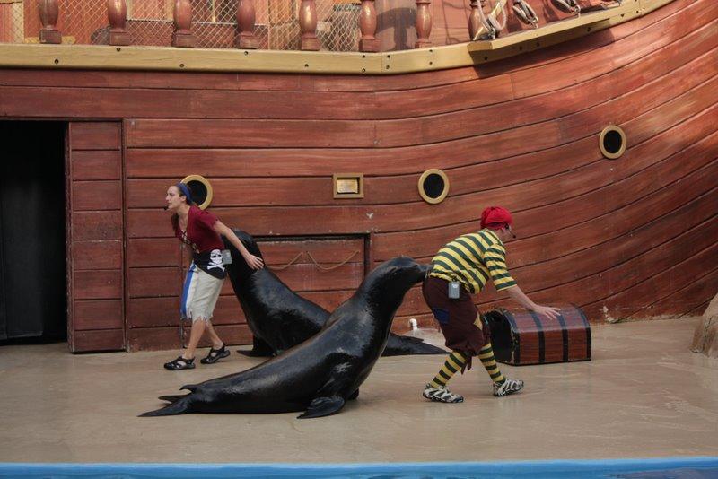 Шоу морских львов