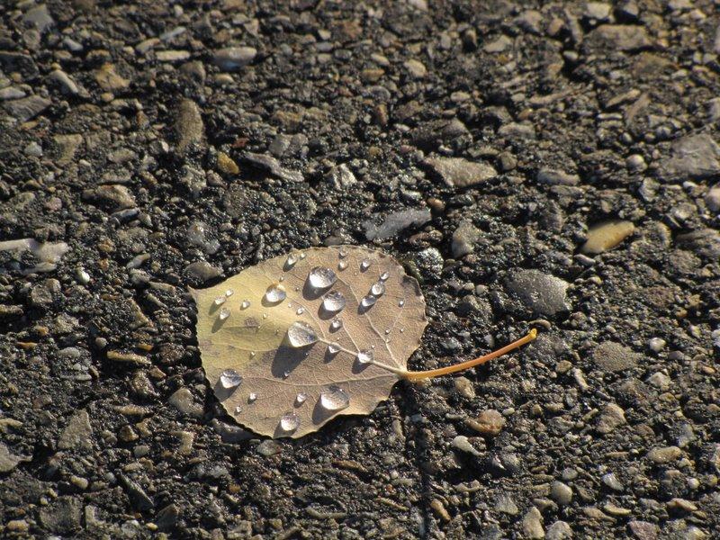 Осенние слезы