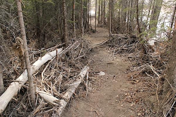 Тропа идет вперед. Народ сам расчистил эту тропу в завали нанесенного рекой мусора. Мусор оставлен наводнением. Которого в этом году не было. Старый хлам.