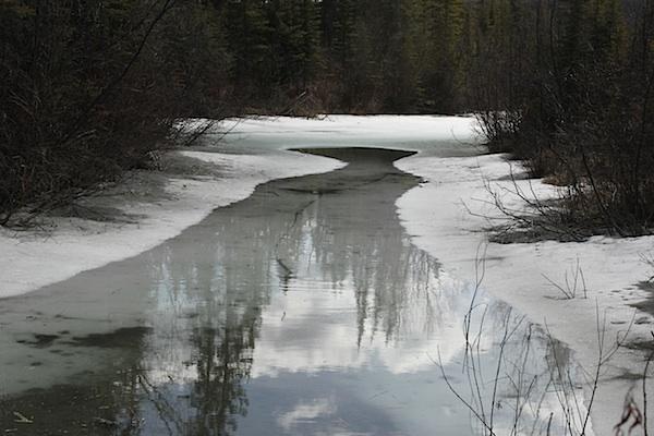 В укромных местах, пруды стоячей воды покрыты еще льдом. Но дни льда уже сочтены.