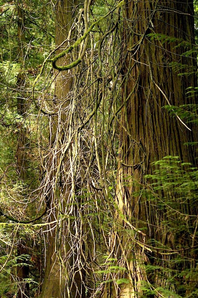 """Такой вот, """"лесной волосатик""""..."""