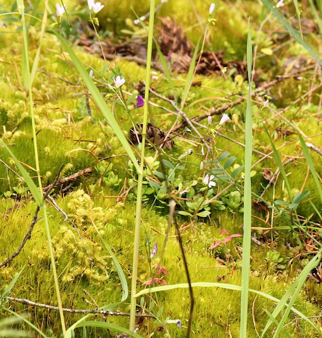 """Великое множество миниатюрных растений. Оно создает этакую своеобразную """"экологическую нишу""""."""