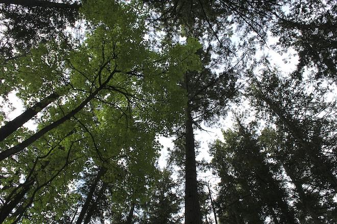 """Высокие деревья создают очень плотную """"крышу"""""""