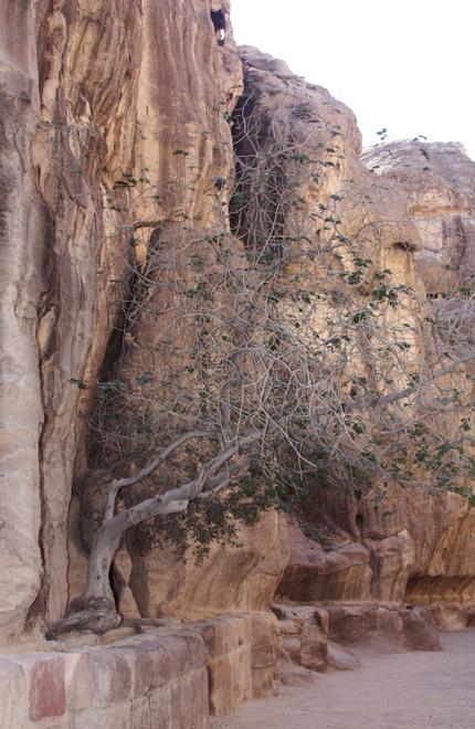 Египет-Иордания 566