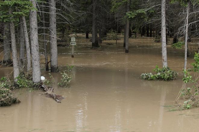 """Таким представился нам лес сразу после наводнения. Река всё-таки """"пришла к нам в гости""""! Я, помнится, ёрничал на эту тему в одном из своих репортажей с """"Тропы Здоровья"""" :)"""