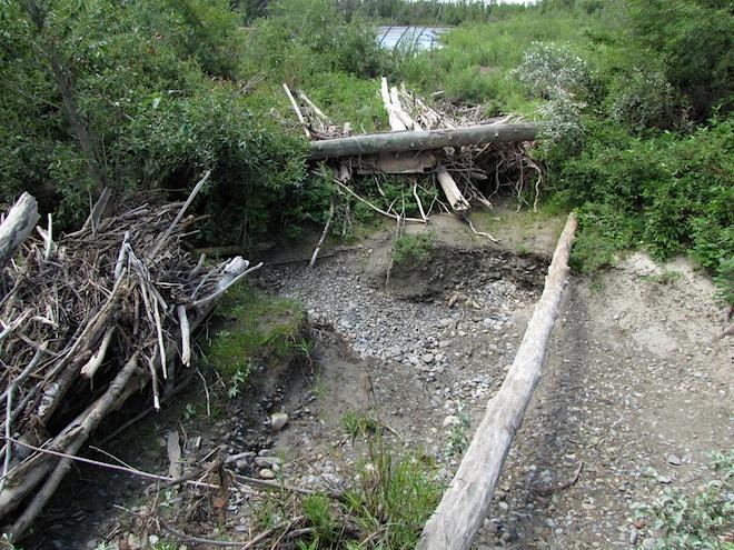 """Уникальный """"бассейн"""" созданный рекой. Все эти """"дрова"""" каким-то удивительным образом собрались на краю ямы. На дне её не было ни щепки :)"""