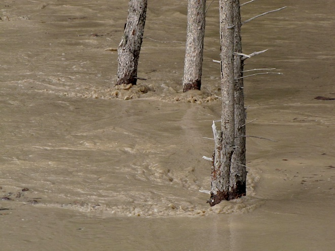 Течение воды было довольно быстрым. Было слышно, как вдали, там где лежало главное русло реки, вода ревела, словно низвергающаяся вниз Ниагара.