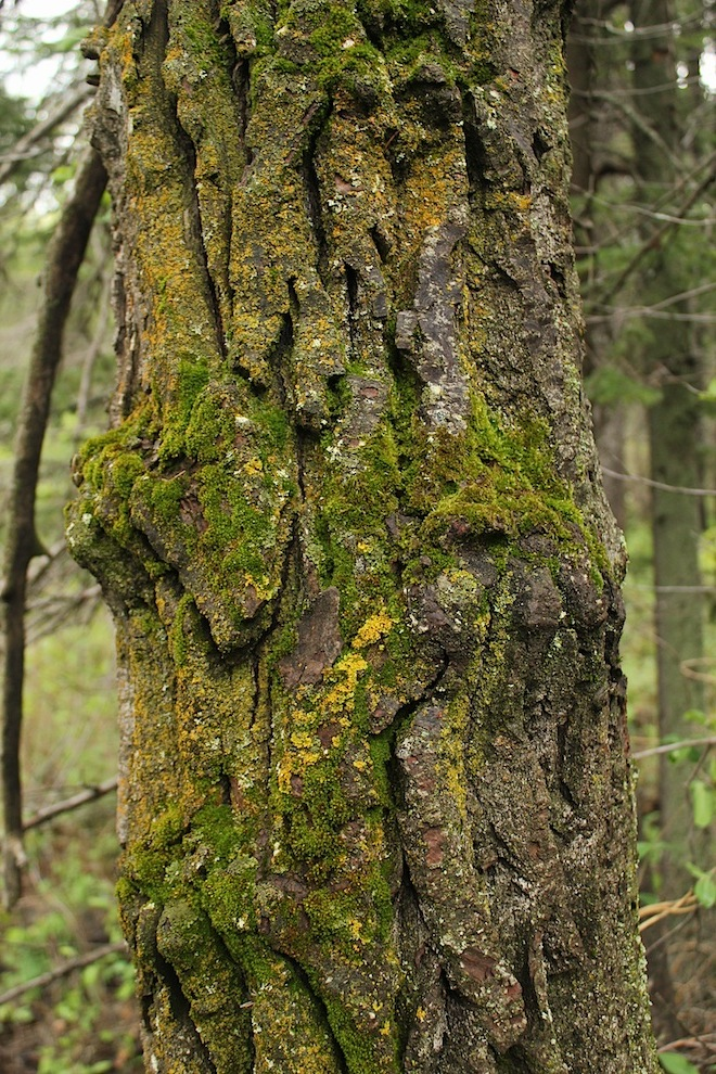 """Какой """"необычно"""" яркий цвет мха.. """"процветает"""", стало быть, мох. А мхи, как мы знаем, любят влагу.."""