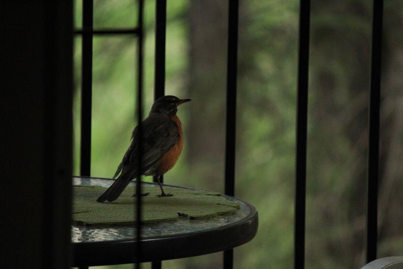 Робин готовится к полету в стекло
